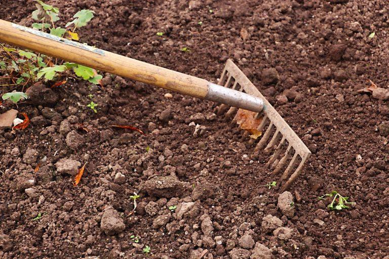 Rodzaje ziemi ogrodowej – kiedy warto ją kupić i co wybrać?
